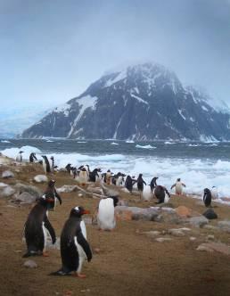 gentoo penguins hire photo art director for Antarctica