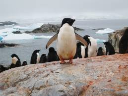 penguins in Antarctica photography tours