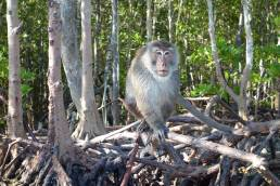 wild monkey Ko Lanta hire art director for Thailand