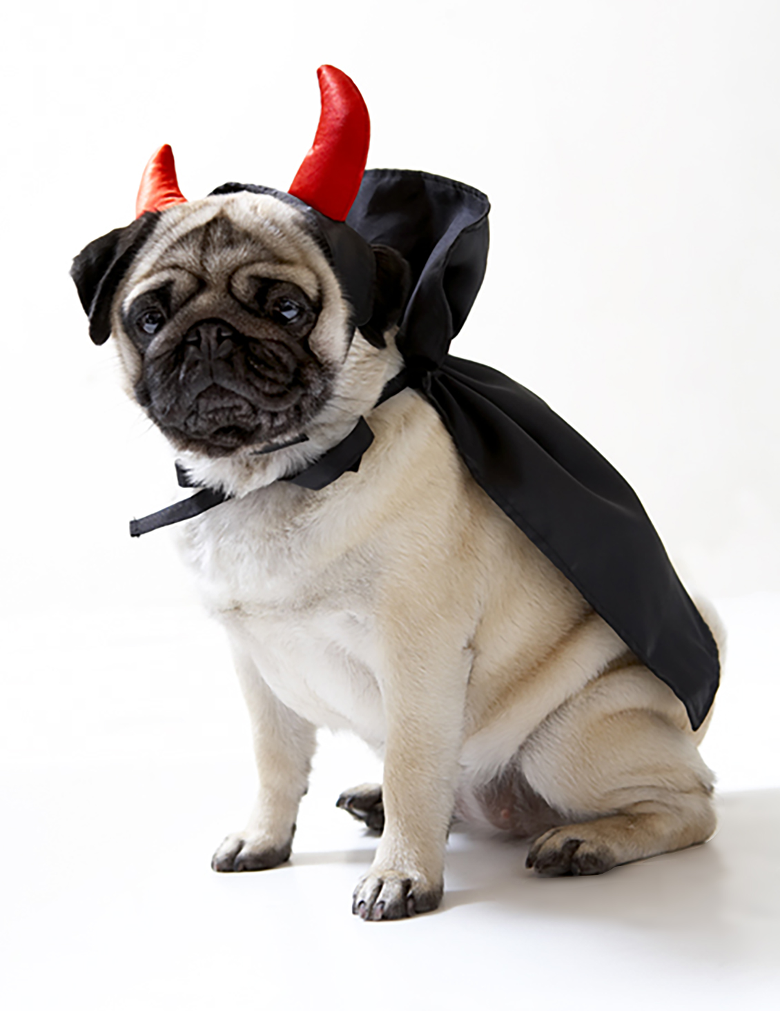 demon dog costume lifestyle photography